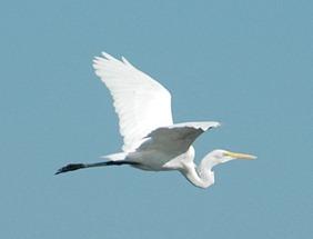 bird-1124d