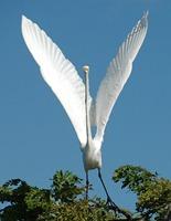 bird-1125